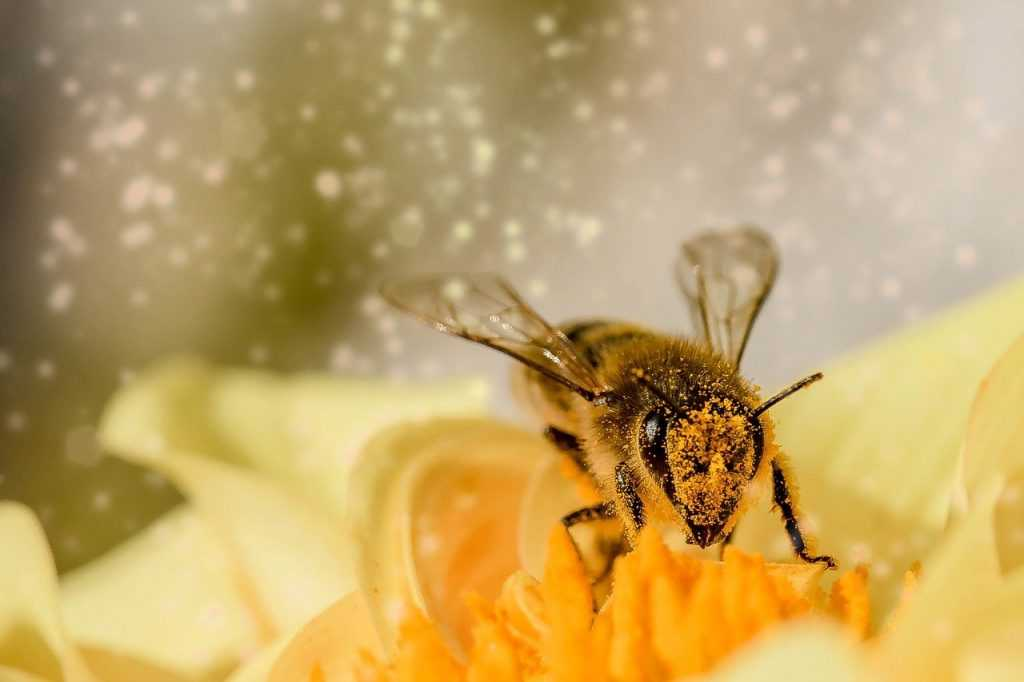 bee, insect, animal