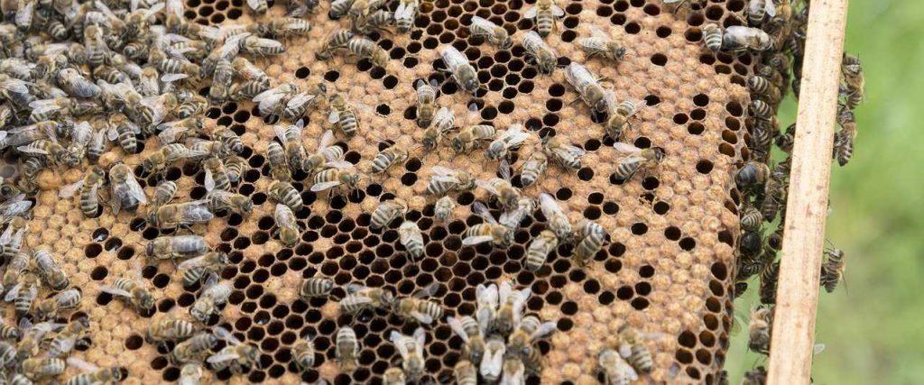 beekeeper, bees, beehive