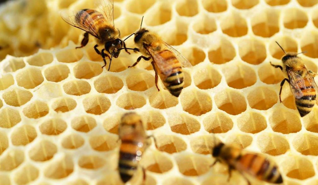 bees, building honeycomb, honey