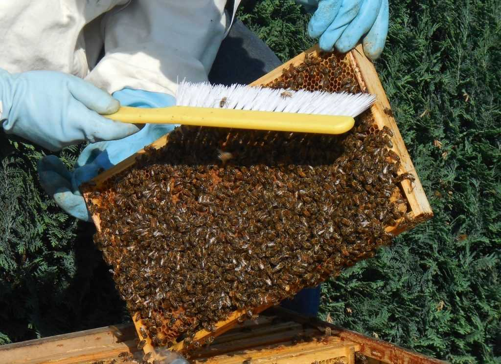 medium wall, bees, hive
