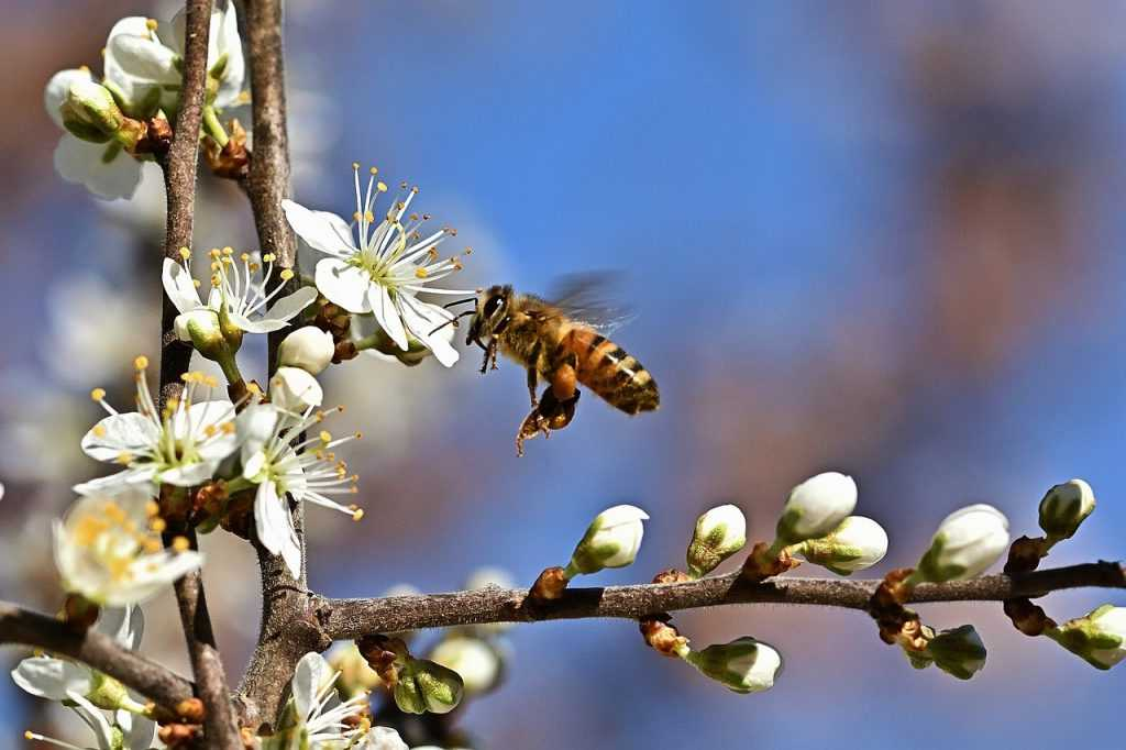 spring, flowers, honey bee